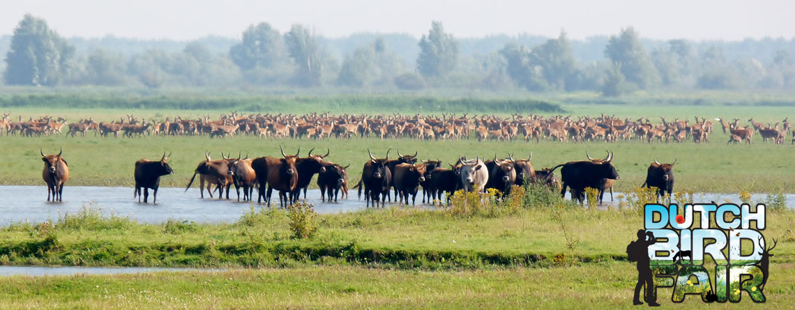 De Dutch Bird Fair…, hét natuurfestival!